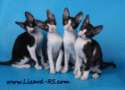 Photo of kittens Litter_D